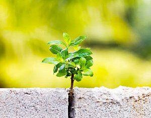 Green Eco Concrete